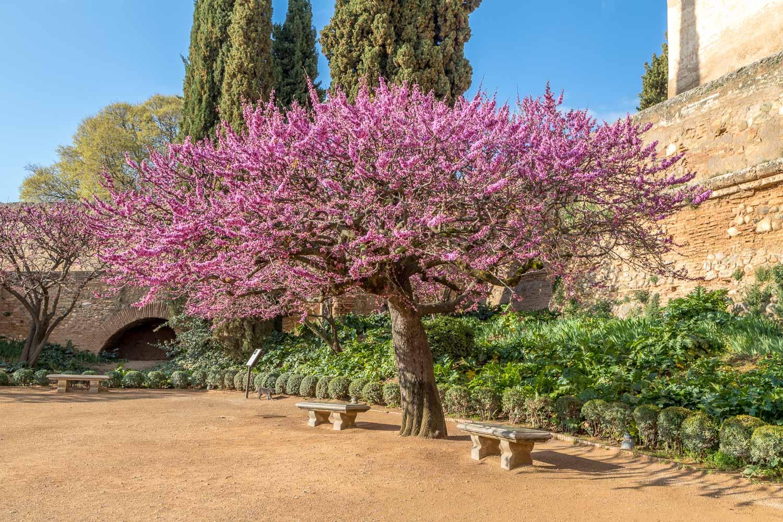 Alhambra-22
