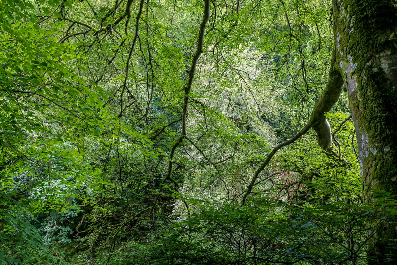 Allen Banks walk, Staward Gorge