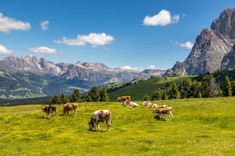 Alpe de Siusi-49