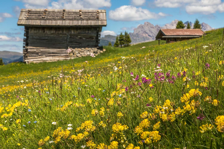 Alpe de Siusi-68