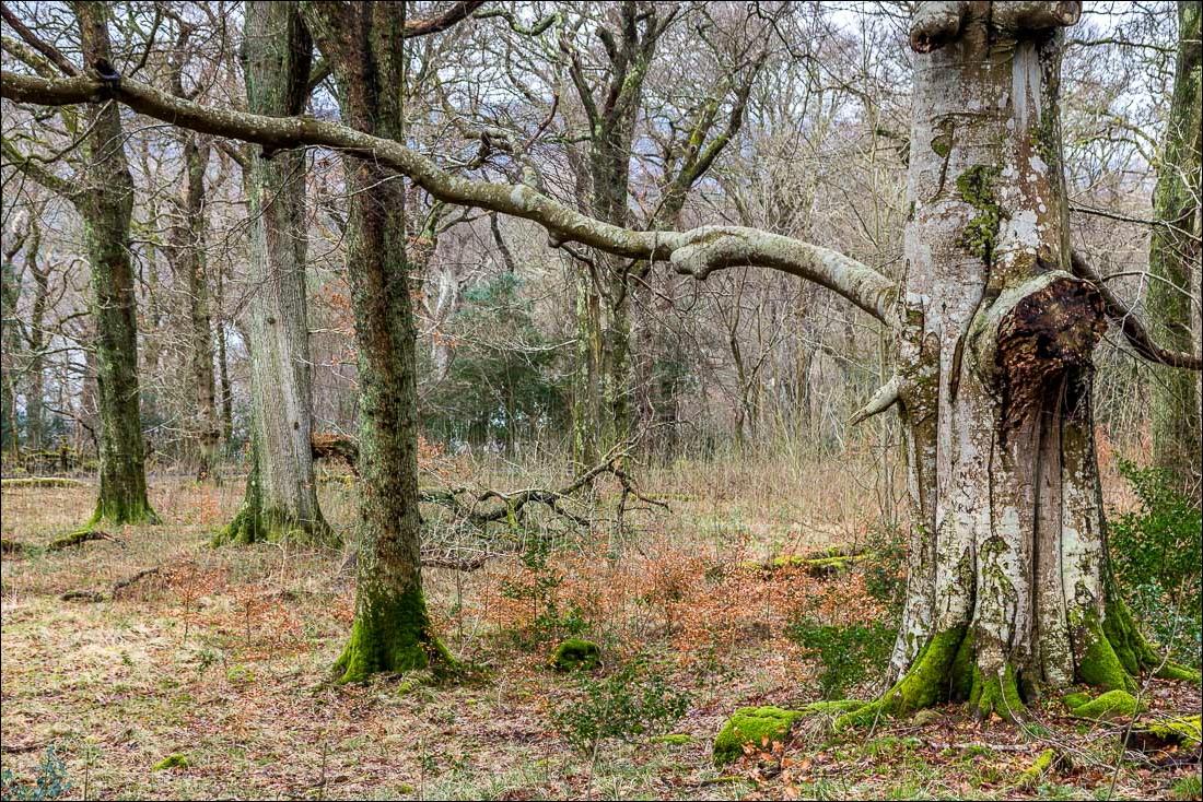 Falcon Crag walk, Lake District, Great Wood