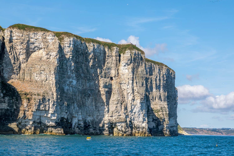 Yorkshire Belle, Bempton Cliffs