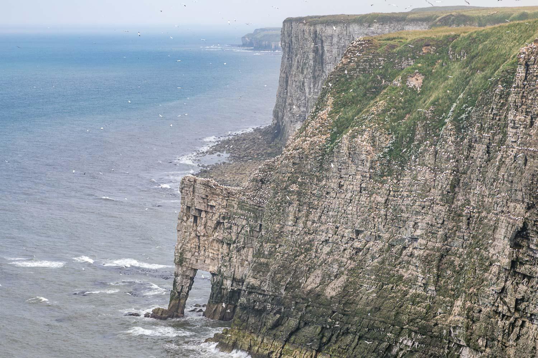 Bempton Cliffs, Scale Nab