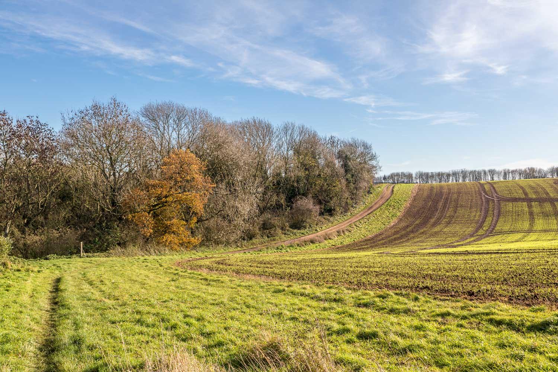 Binbrook walk, Lud's Well Plantation