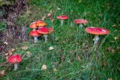 Mushrooms, Iron Keld Plantation