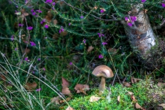 Mushrooms, Iron Keld Plantation