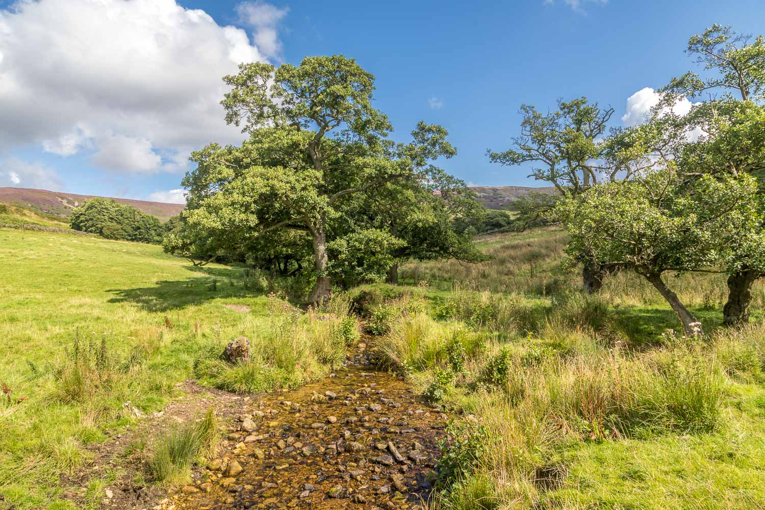 Black Hambleton walk, Old Gill