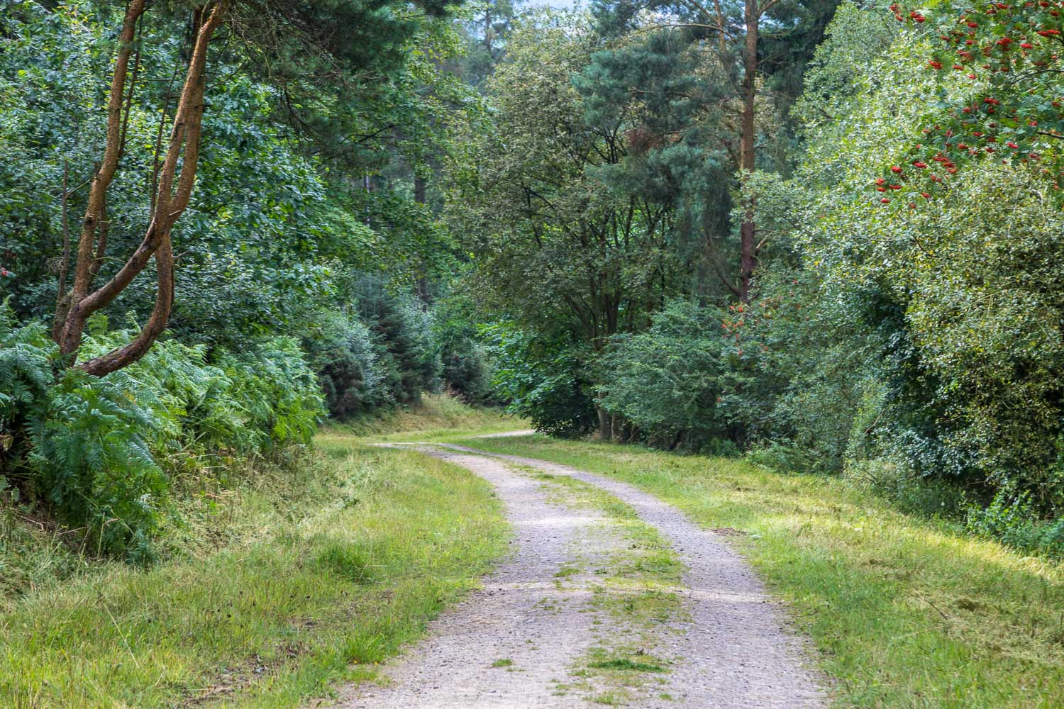 Black Hambleton walk, Silton Forest