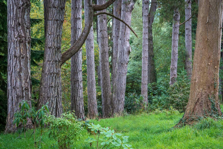 Bodnant Garden, tree
