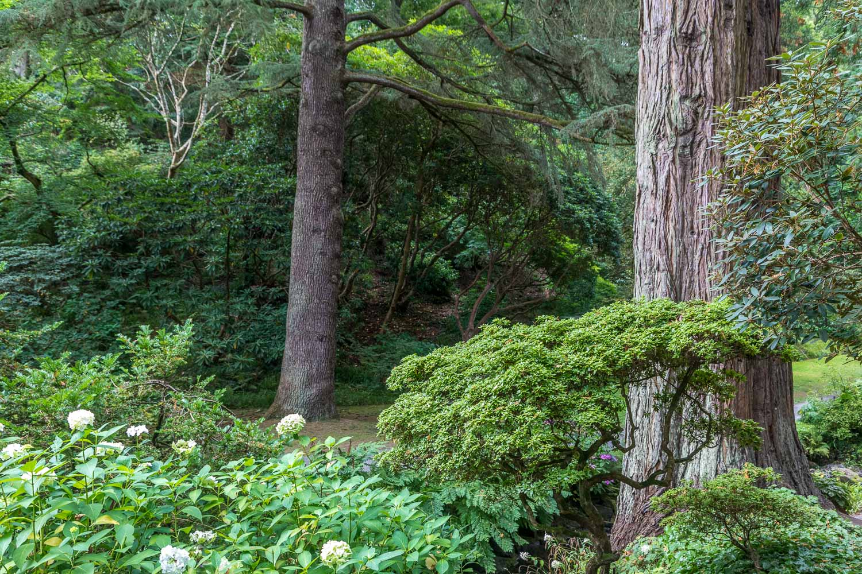 The Dell Bodnant Garden
