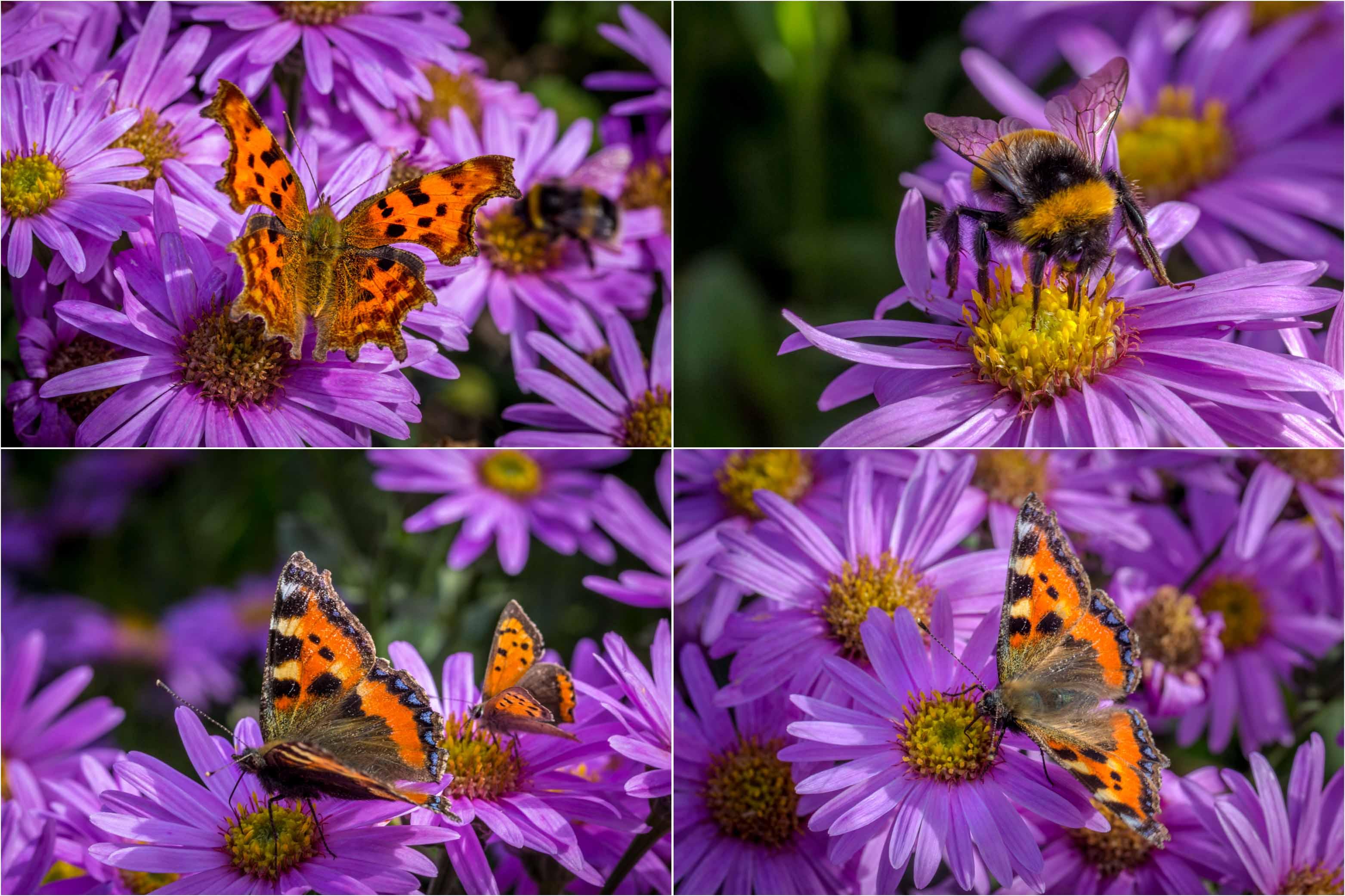 Bodnant Garden, butterfly