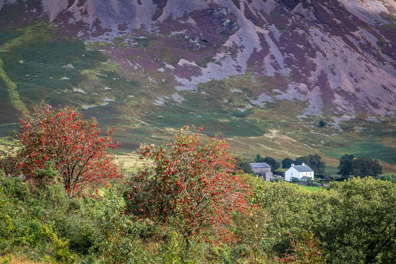Brackenthwaite Hows walk, Lanthwaite Green, Grasmoor