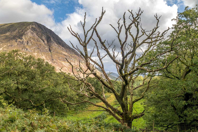 Brackenthwaite Hows walk, Lanthwaite Hill, Grasmoor