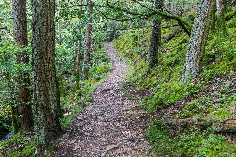 Brackenthwaite Hows walk, Lanthwaite Hill