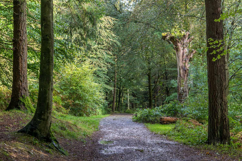 Brackenthwaite Hows walk, Lanthwaite Wood