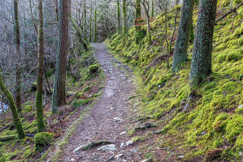 Lanthwaite Wood walk, Liza Beck
