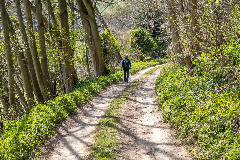 Chapman Banks Wood, Hackness walk