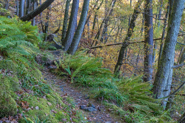 Lodore Wood