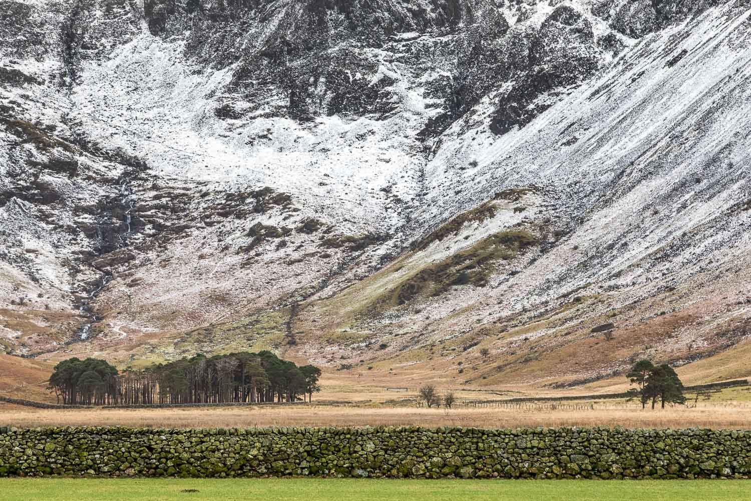 Buttermere pines and Warnscale Bottom