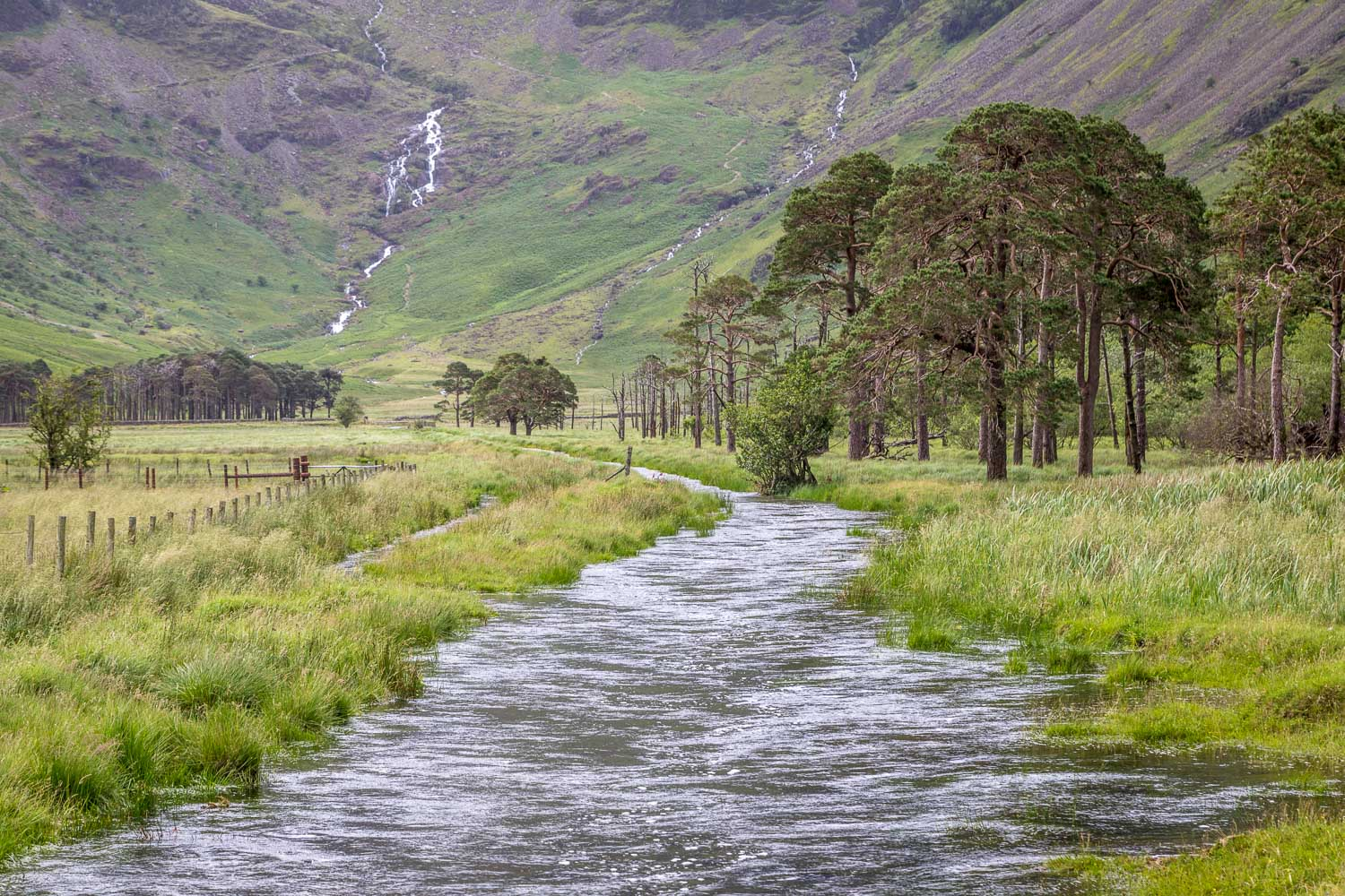 Warnscale Beck, Buttermere pines