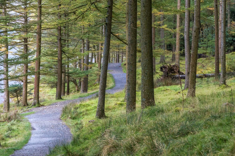Burtness Wood