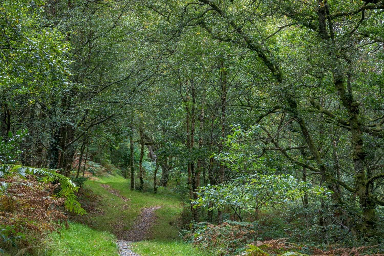 Capel Curig walk