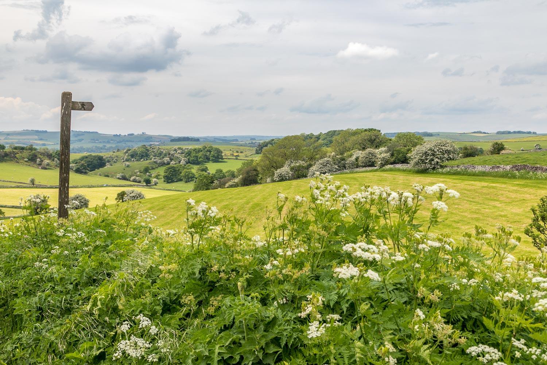 Carsington walk