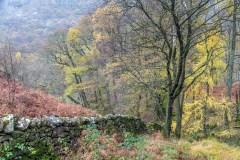 Castle Crag walk, Low Hows Wood