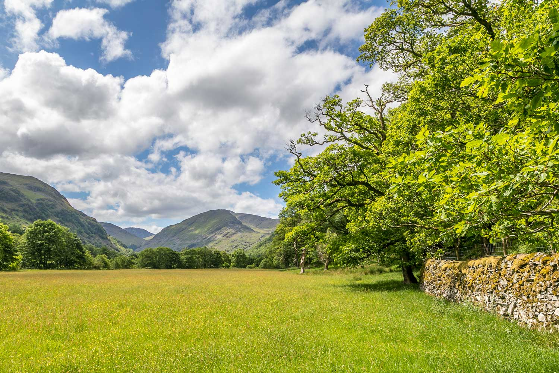 Borrowdale meadow