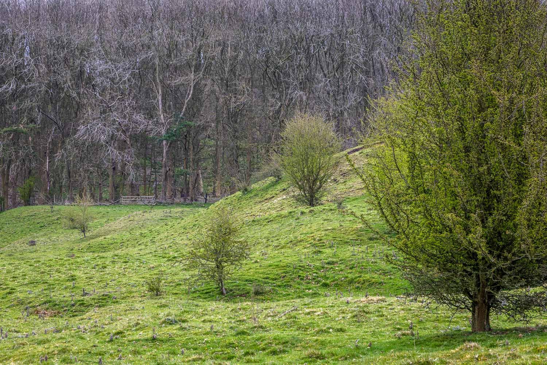 Chalkland Way, Deep Dale