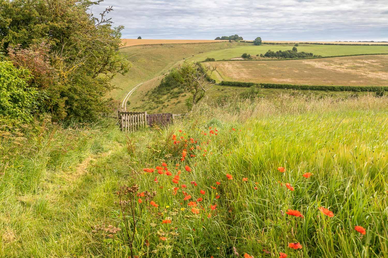 Chalkland Way, Vessey Pasture Dale