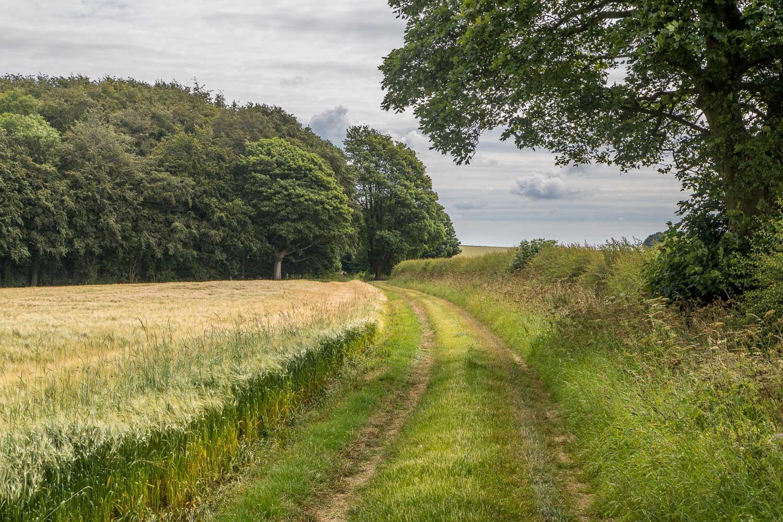 Chalkland Way, Wharram Percy Wold