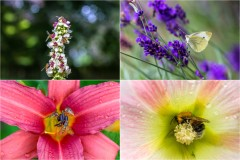 Insects gathering pollen