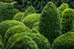 Baslow Hall garden