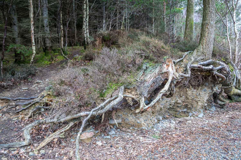 High Wood Crummock Water