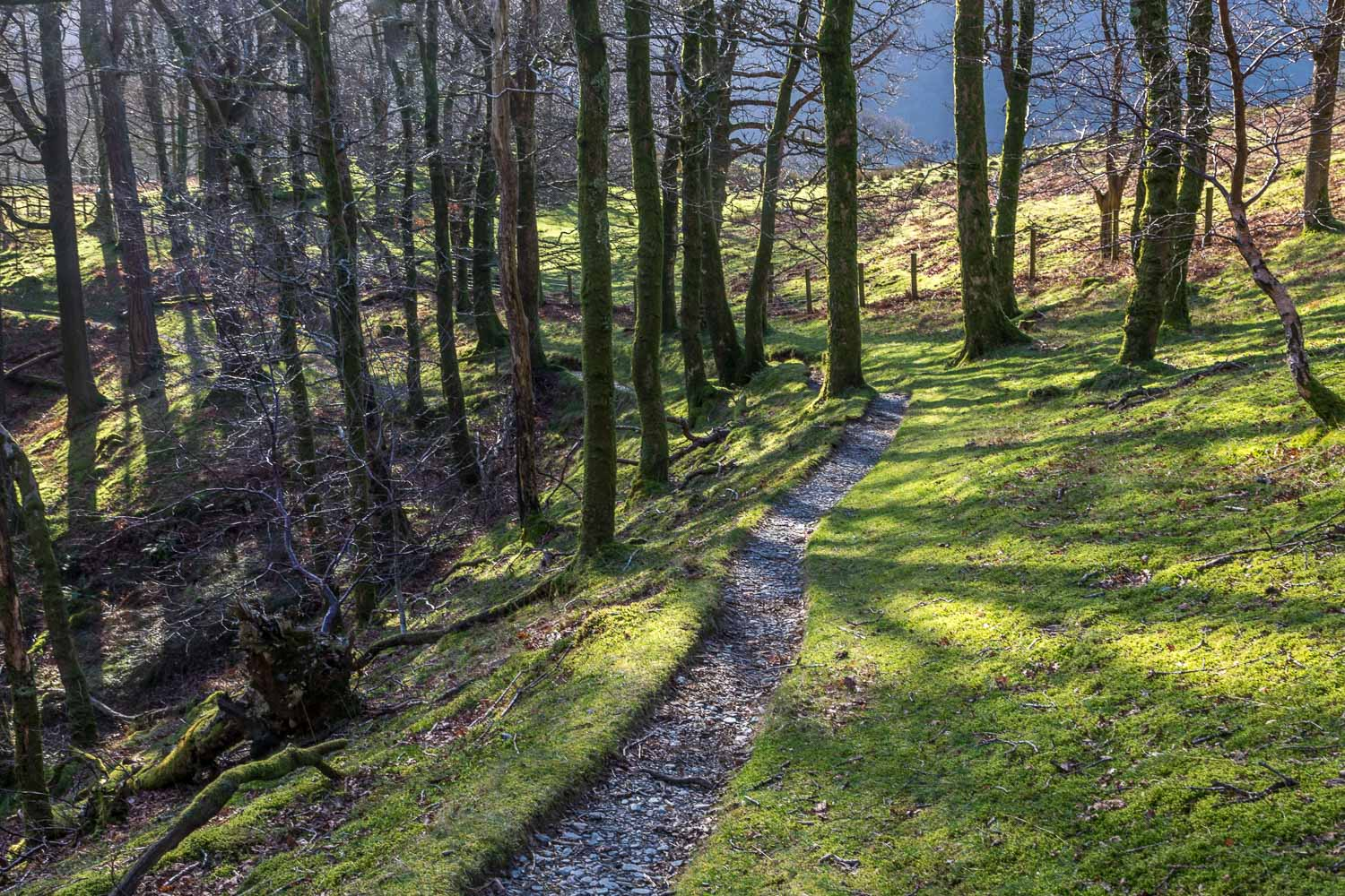 Ghyll Wood, Buttermere