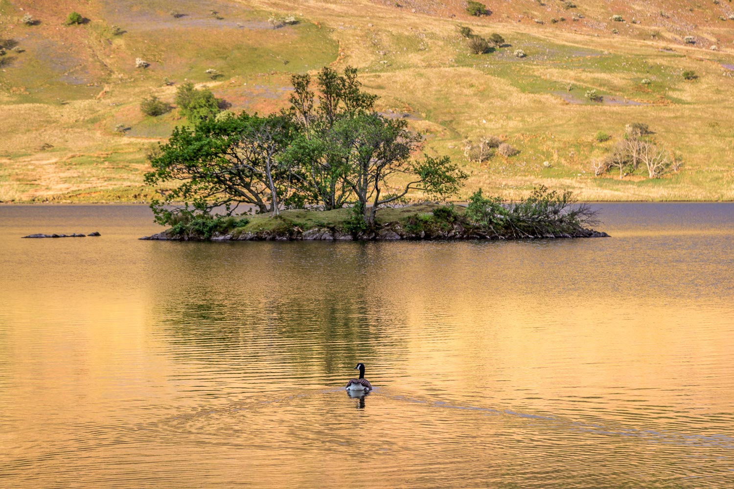 Woodhouse Island Crummock Water