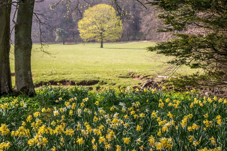 Dalemain Garden walk