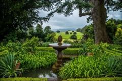 Dalemain Garden, silver fir