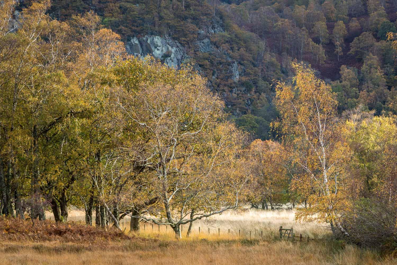 Borrowdale woodland