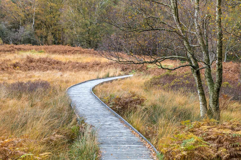 Borrowdale birches, Manesty