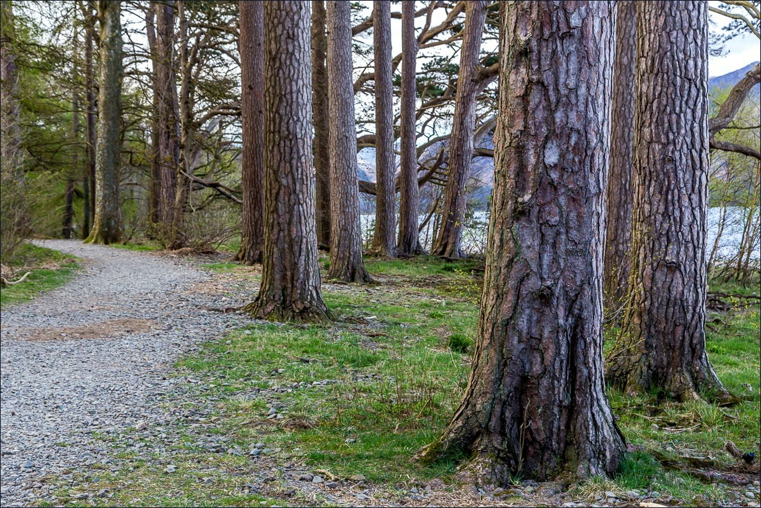Derwent Water, Great Wood