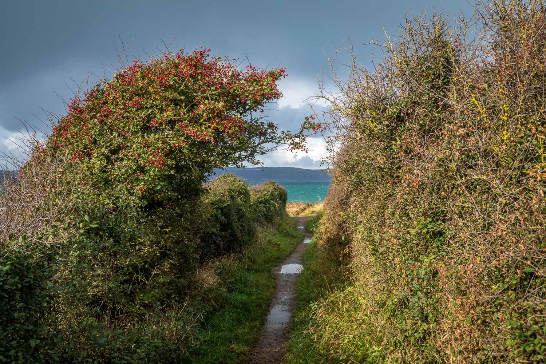 Dinas Island walk