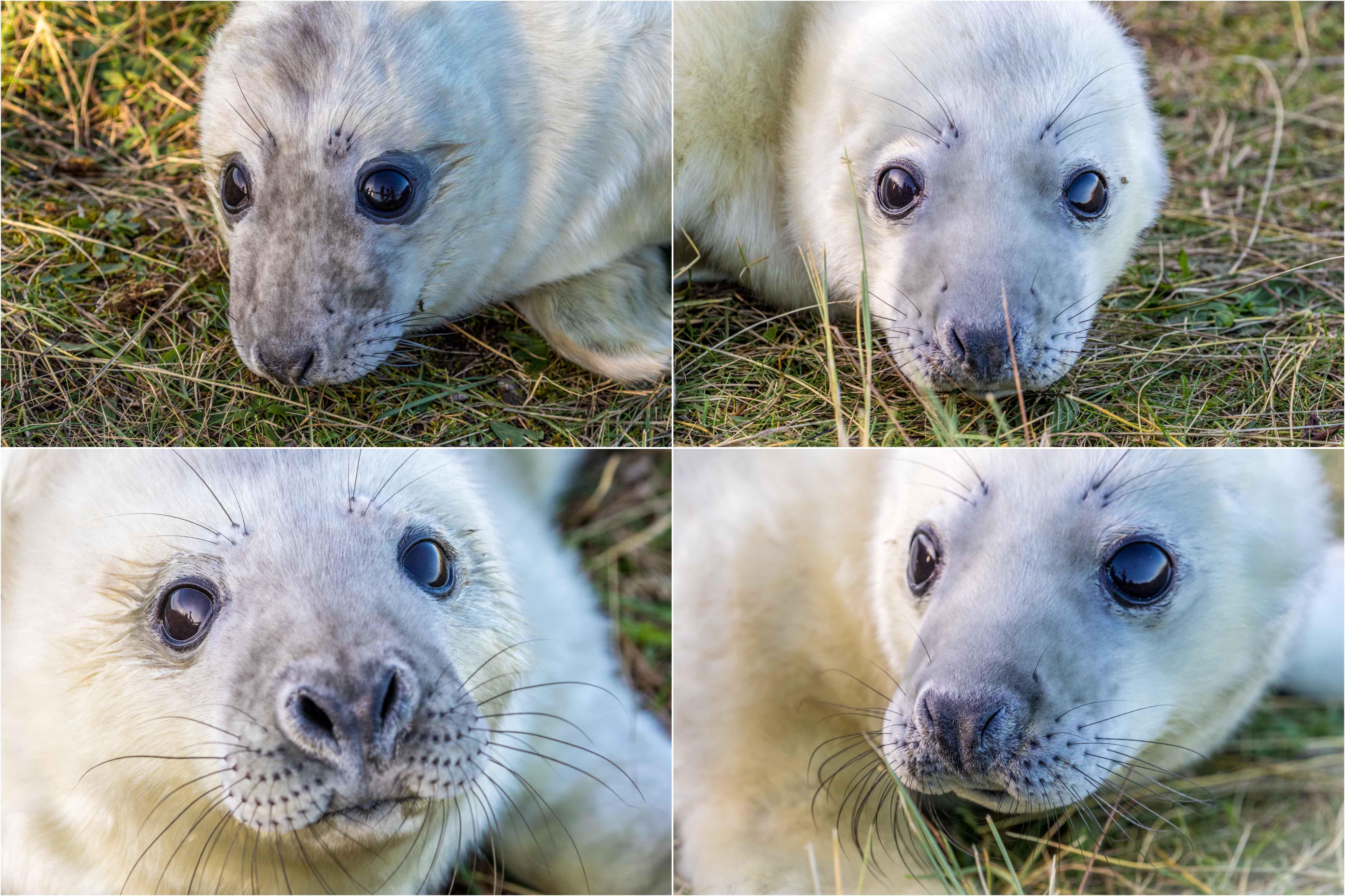 Donna Nook seal pups