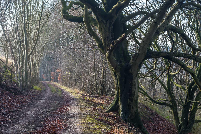 Drewton walk