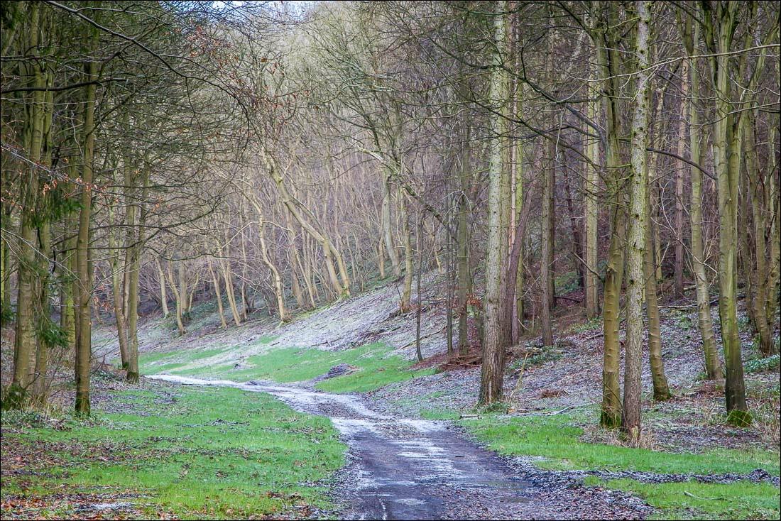 Drewton walk, East Dale