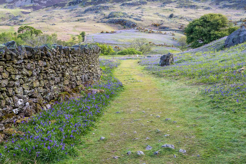 Rannerdale, dry stone wall