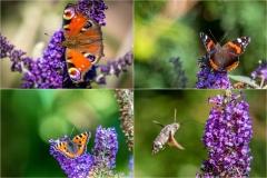 Butterflies Lake District