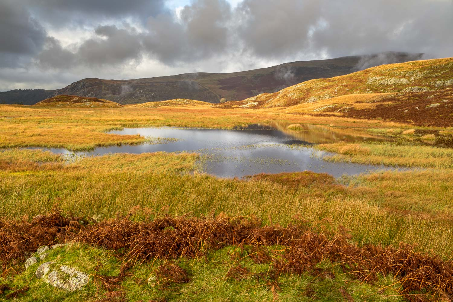 Siney Tarn