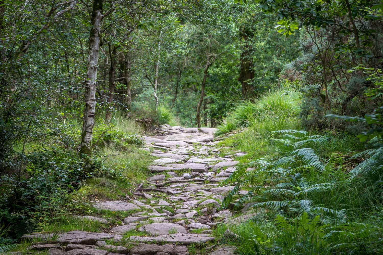 Eskdale woodland